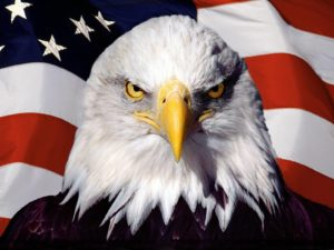744586-bald-eagle-photos